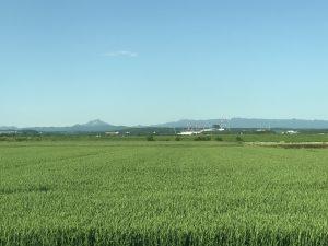 ファイターズ球場と恵庭岳